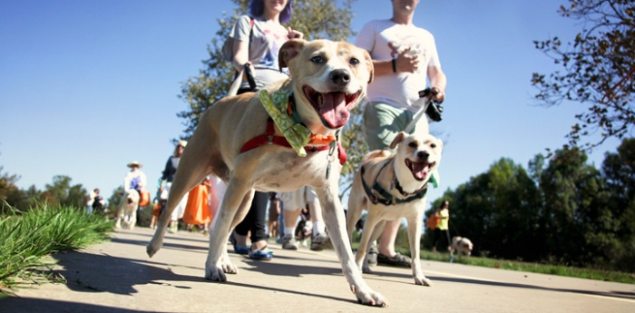 Strut-Your-Mutt-dog-walk-fundraiser-152